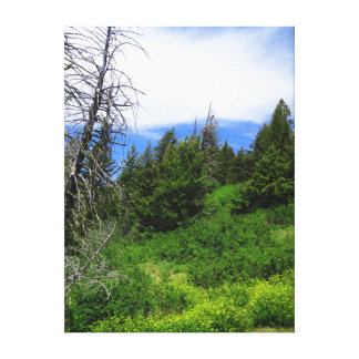 Idaho Wilderness Canvas Print