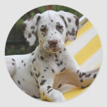 Idea dálmata del regalo de los pegatinas del perro