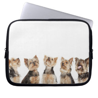 Identical dogs sitting together laptop sleeves