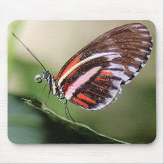 Identificación Mousepad de la mariposa