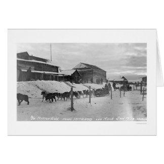 Iditarod Alaska Birdseye 1914 Greeting Card