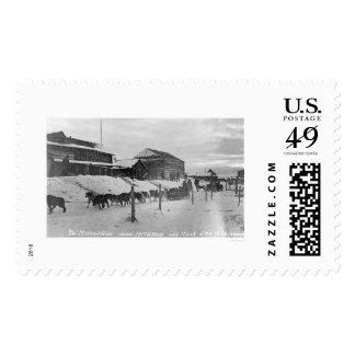 Iditarod Alaska Birdseye 1914 Stamps