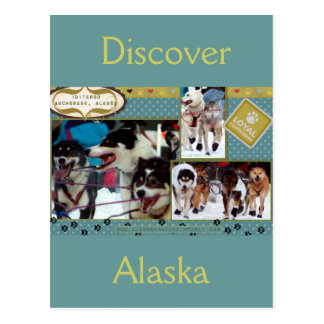 Iditarod Loyal Companions Postcard