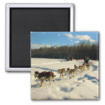 Iditarod Trail Sled Dog Race 2 Inch Square Magnet