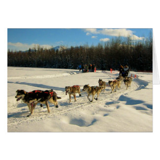 Iditarod Trail Sled Dog Race Greeting Card