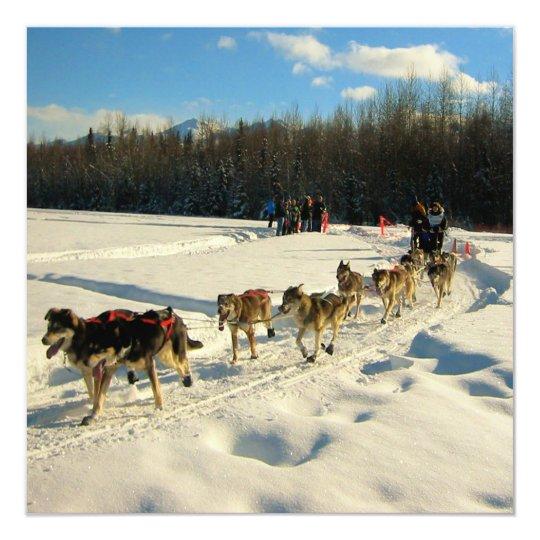 Iditarod Trail Sled Dog Race Card