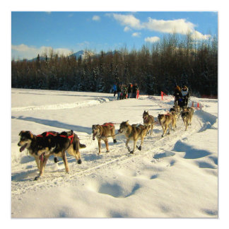 "Iditarod Trail Sled Dog Race 5.25"" Square Invitation Card"