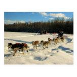 Iditarod Trail Sled Dog Race Post Card