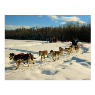 Iditarod Trail Sled Dog Race Postcard