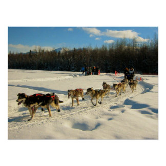 Iditarod Trail Sled Dog Race Poster