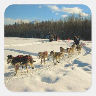 Iditarod Trail Sled Dog Race Square Sticker