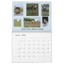 IGEA Gypsy Equine Photo Calendar 12 MONTH