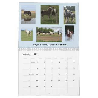 IGEA Gypsy Equine Photo Calendar 12 MONTH