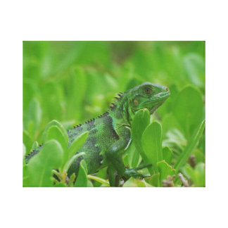 Iggy the Green Iguana Gallery Wrapped Canvas
