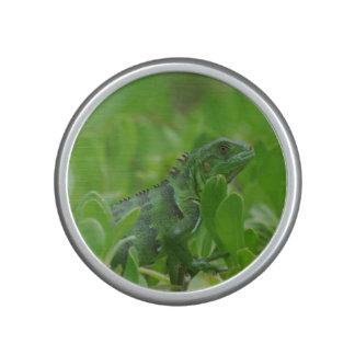 Iggy the Green Iguana Speaker