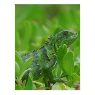 Iggy the Green Iguana Postcard