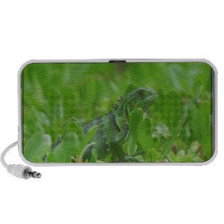 Iggy the Green Iguana iPhone Speaker