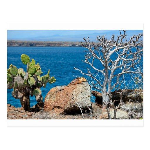 Iguana amarilla de la tierra de las Islas Galápago Tarjeta Postal