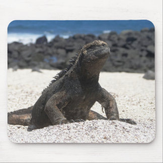 Iguana and rocks of the Galapagos Mouse Pad