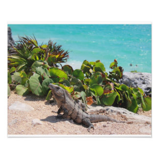 Iguana and turquoise sea photo print