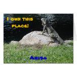 Iguana, Aruba Tarjetón