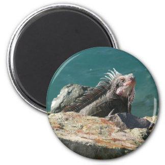 Iguana at St. Thomas 2 Inch Round Magnet