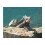 Iguana at St. Thomas Canvas Print