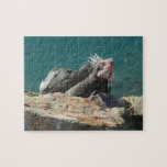 Iguana at St. Thomas Jigsaw Puzzle