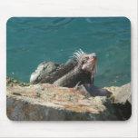 Iguana at St. Thomas Mouse Pad