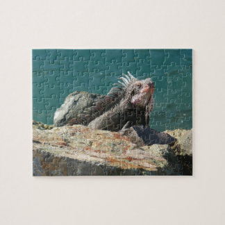 Iguana at St. Thomas Puzzle