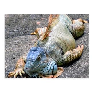 Iguana azul postales