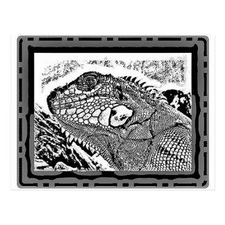 Iguana black white postales