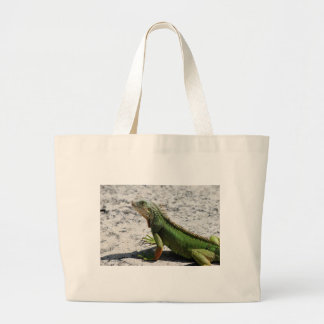 Iguana Bolsa