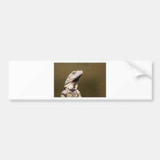 Iguana Bumper Sticker