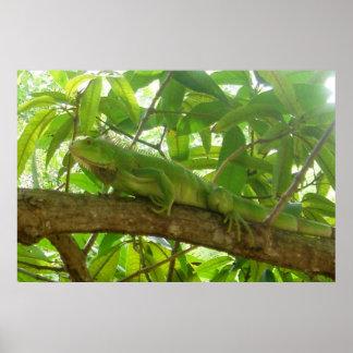 Iguana Camouflage Poster