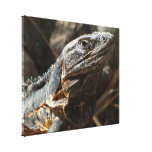 Iguana Checking You Out Canvas Prints