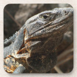 Iguana Checking You Out Drink Coasters