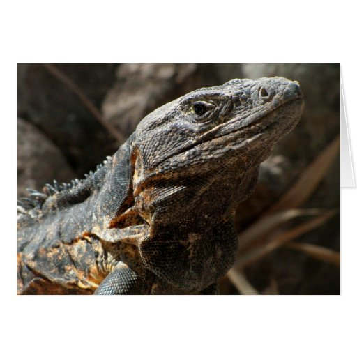 Iguana Checking You Out Greeting Card