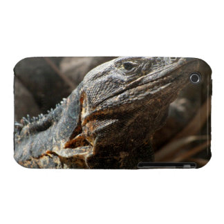 Iguana Checking You Out iPhone 3 Covers
