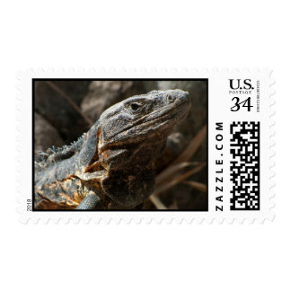 Iguana Checking You Out Postage