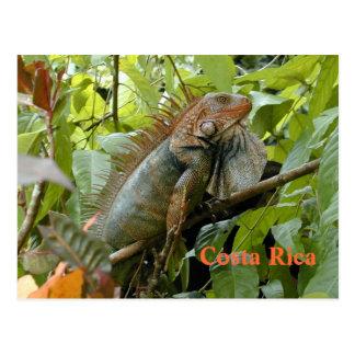 Iguana Costa Rica Tarjetas Postales