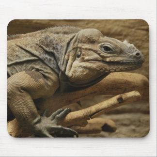 Iguana cubana alfombrilla de raton