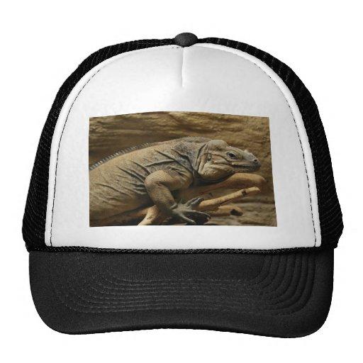 Iguana cubana gorro