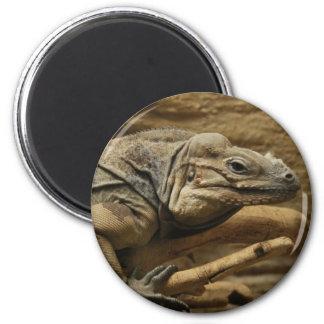 Iguana cubana imán redondo 5 cm