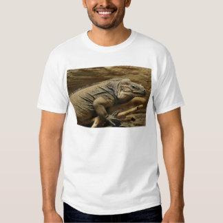 Iguana cubana playera