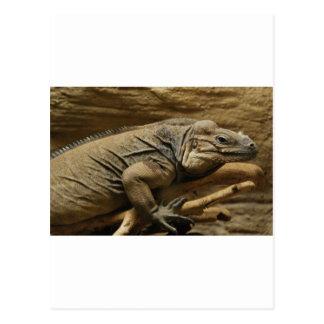 Iguana cubana postales