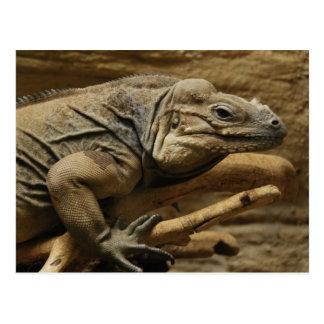 Iguana cubana tarjeta postal