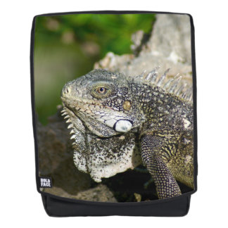 Iguana, Curacao, Caribbean islands, Photo Backpack