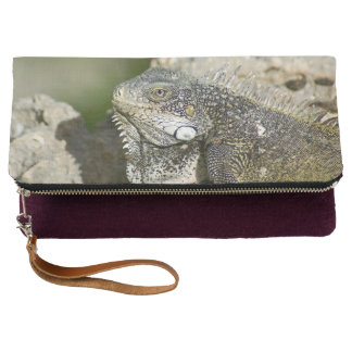 Iguana, Curacao, Caribbean islands, Photo Clutch