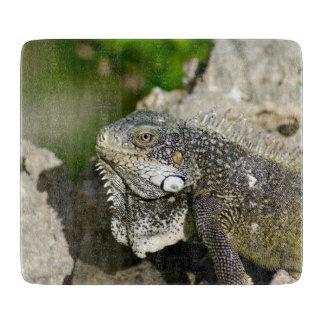 Iguana, Curacao, Caribbean islands, Photo Cutting Board
